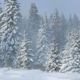 Wind in Winter Forest - VideoHive Item for Sale