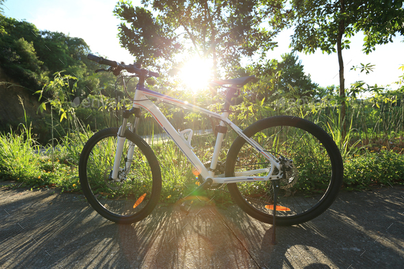 Mountain bike under the tree - Stock Photo - Images