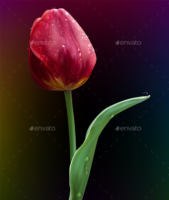 Tulip Flower - Flowers & Plants Nature