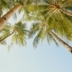 Palm Trees Against the Background of a Light Blue Sky in Clear Weathe - VideoHive Item for Sale