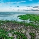 Afternoon  on the Shore of the Beach with Green Algae - VideoHive Item for Sale