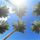 Palms - VideoHive Item for Sale