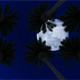 Palm Trees Under the Moon - VideoHive Item for Sale