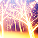 Light Forest - VideoHive Item for Sale