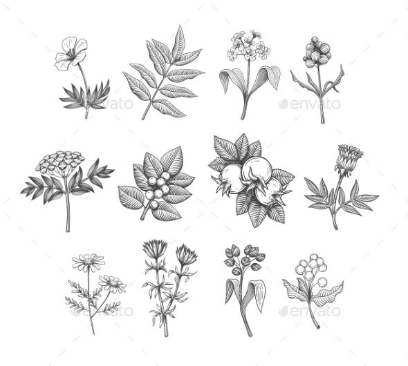 Vector Line Art Plants - Flowers & Plants Nature