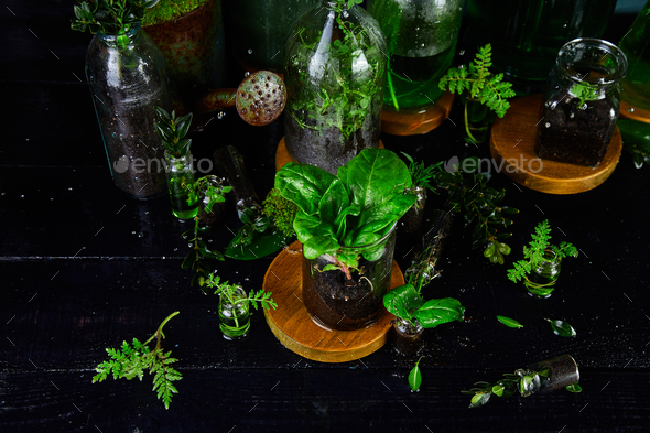 Mini glass vases and bottle with green  leaves, plants. Gardening. - Stock Photo - Images