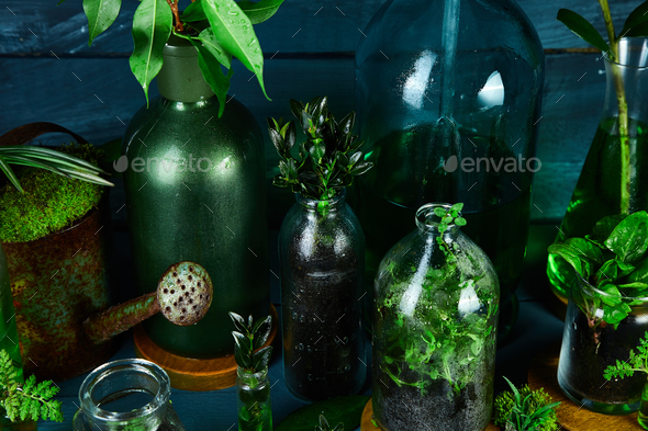 Mini glass vases and bottle with green  leaves, plants. - Stock Photo - Images
