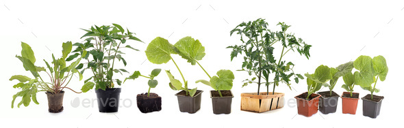 vegetables plants in studio - Stock Photo - Images