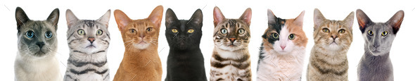 cats in studio - Stock Photo - Images