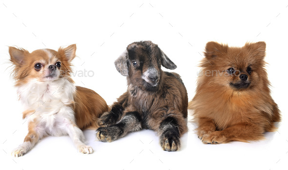 kid and dogs - Stock Photo - Images