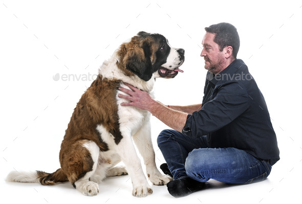 young saint bernard and owner - Stock Photo - Images
