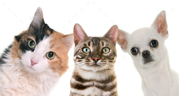 pet on studio - Stock Photo - Images