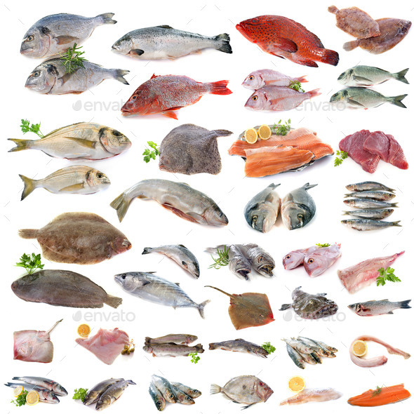 group of fish - Stock Photo - Images