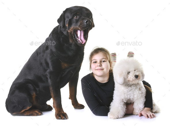 young girl and dogs - Stock Photo - Images