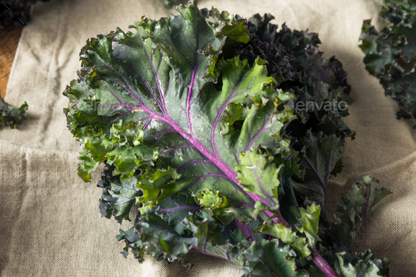 Organic Healthy Red Kale - Stock Photo - Images