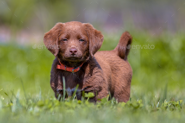 Little puppy in the garden - Stock Photo - Images