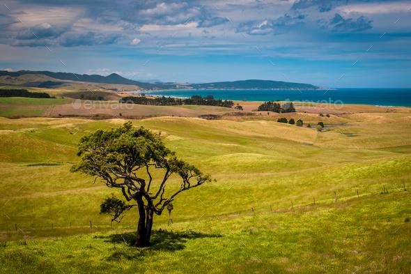 Lonely tree on New Zealand coast - Stock Photo - Images