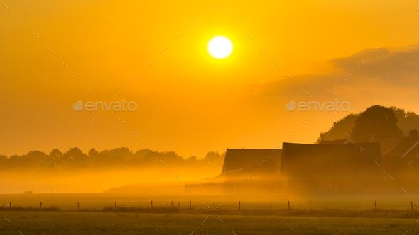Orange farm sunrise agricutural scenery - Stock Photo - Images