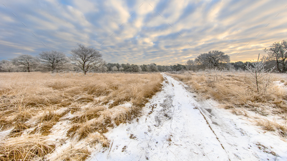 Path through Winter heathland landscape panorama Assen Drenthe - Stock Photo - Images
