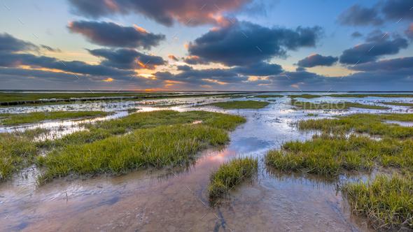 Wadden sea Tidal marsh mud flat - Stock Photo - Images