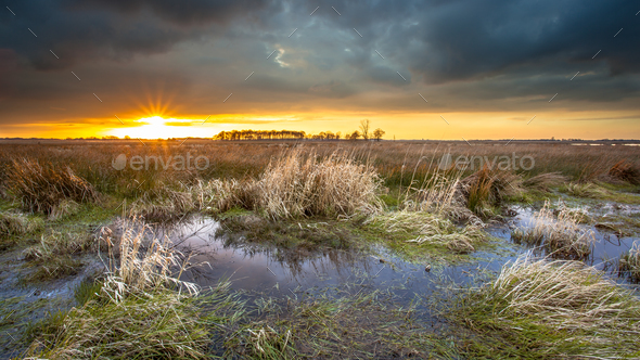 Dark threatening sky over swamp area during sunset - Stock Photo - Images