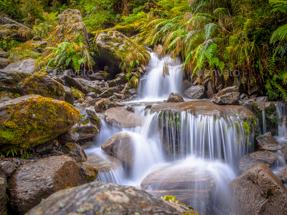 small rainforest waterfall - Stock Photo - Images