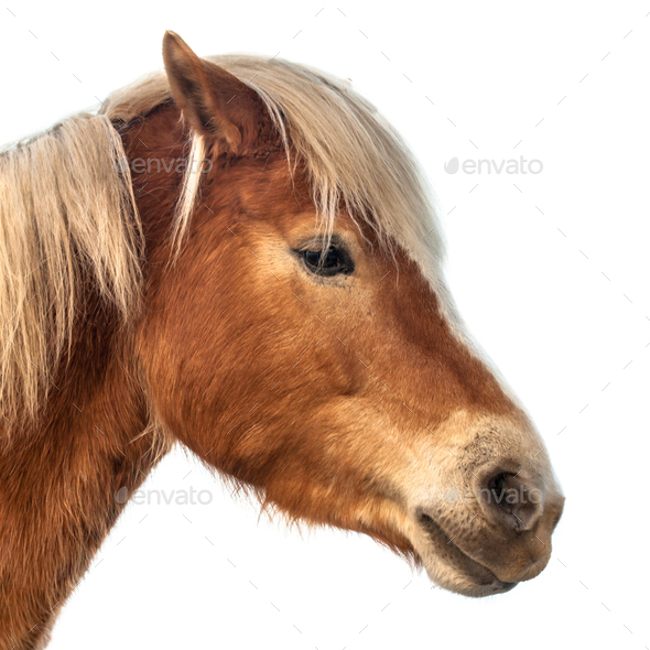 Horse Head on white background - Stock Photo - Images