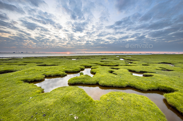 Erosion holes in meadow Tidal marsh of Dollard - Stock Photo - Images