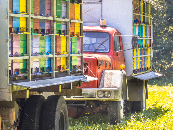 Mobile beehive on trucks - Stock Photo - Images