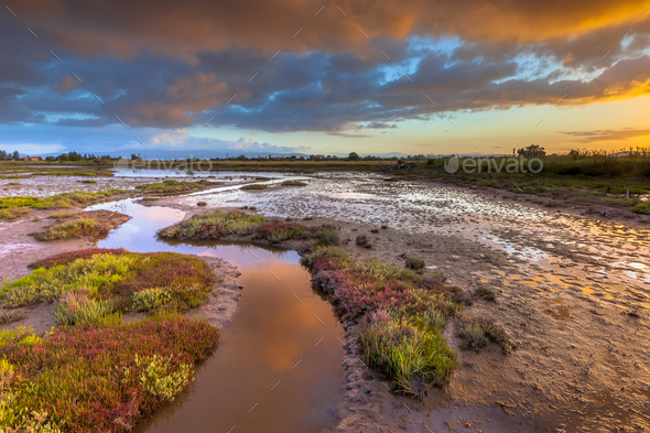 Sunrise over Salicornia Estuary - Stock Photo - Images