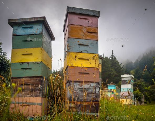 Colorful vintage wooden Bee Hives - Stock Photo - Images