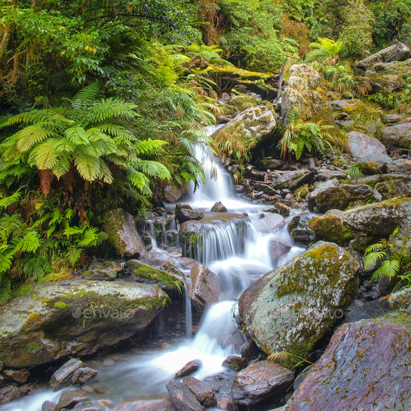Waterfall in temperate New zealand rain forest - Stock Photo - Images