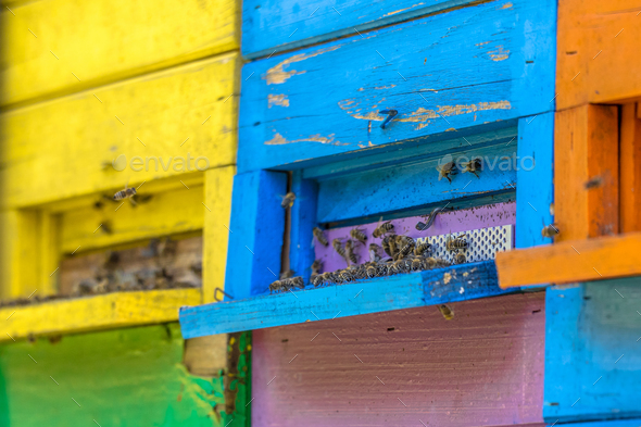 Colorful beehives close up - Stock Photo - Images