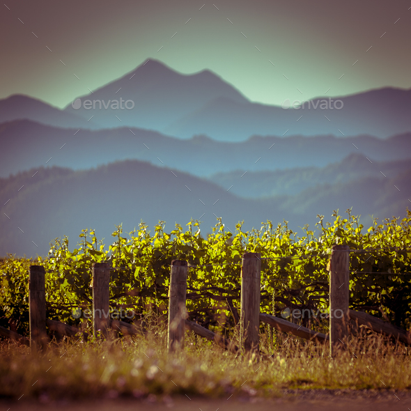 Vineyard with mountain view background - Stock Photo - Images