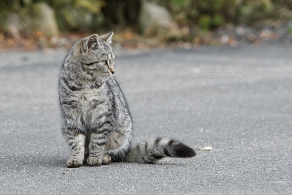 Portrait of shaggy cat on a asphalt road - Stock Photo - Images