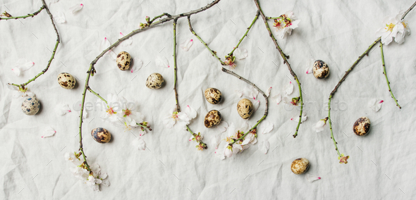 Easter background with eggs and almond blossom flowers - Stock Photo - Images