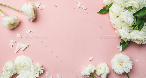 Flat Lay Of White Ranunculus Flowers Light Pink Background Wide