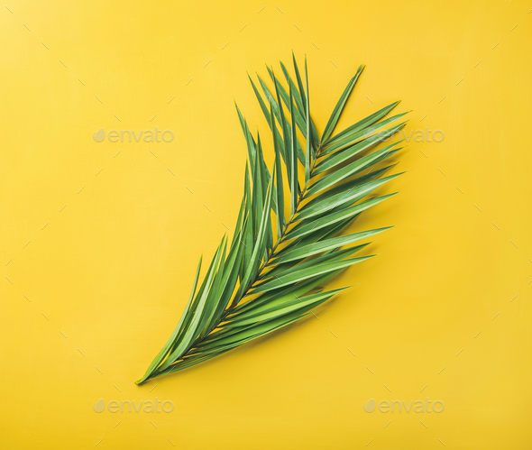 Green palm branches over yellow background, top view - Stock Photo - Images