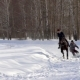 A Girl Galloping on a Horse at a Gallop A Horse Is Dragging a Snowboarder Guy on a Rope A - VideoHive Item for Sale