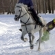 A Girl Galloping on a Horse at a Gallop. A Horse Is Dragging a Snowboarder Guy on a Rope - VideoHive Item for Sale