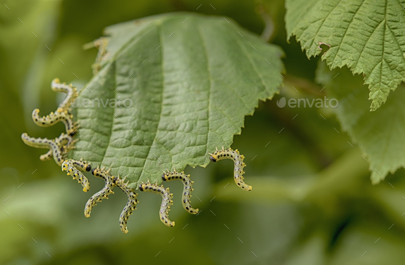 beautiful caterpillars - Stock Photo - Images