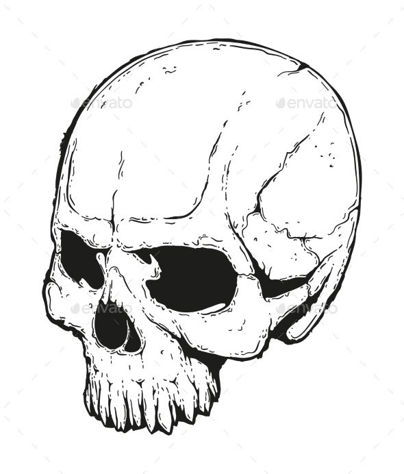 Human Skull Illustration - Miscellaneous Vectors