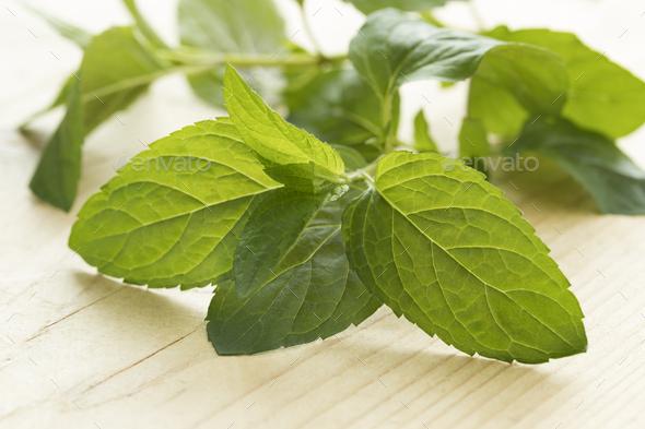 Twig of chocolat mint - Stock Photo - Images