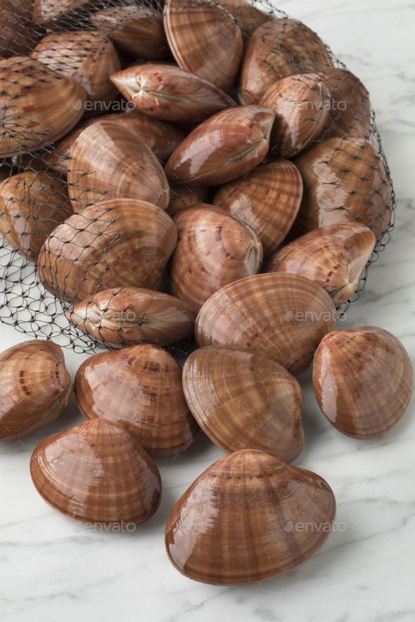 Net bag with fresh raw  smooth clams - Stock Photo - Images