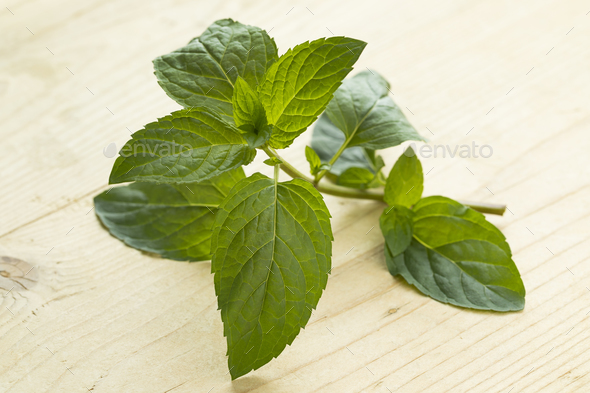 Twig of chocolat mint - Stock Photo - Images