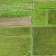 Rice Field Plantation Patchwork Agricultural Background Aerial Bali, Indonesia - VideoHive Item for Sale