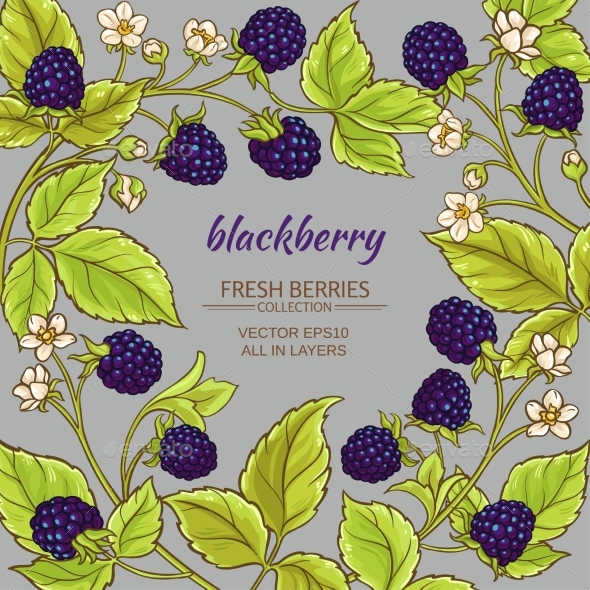 Blackberry Vector Frame - Food Objects