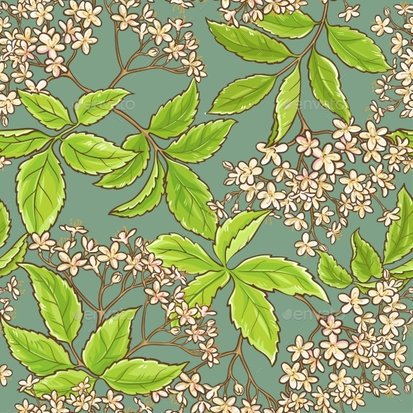 Elderflower Vector Pattern - Flowers & Plants Nature