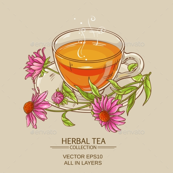 Cup of Echinacea Tea - Flowers & Plants Nature