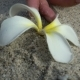 Female Hand Pick Up White Flower in the Sand, Concept Ecology, Green Earth Disaster Destroyed - VideoHive Item for Sale